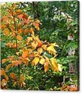 Autumn Begins At Breakheart Reservation Acrylic Print