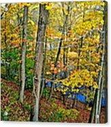 Autumn Below Acrylic Print