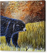 Autumn Black Bear Acrylic Print
