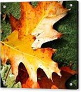 Autumn Blaze Acrylic Print by JAMART Photography