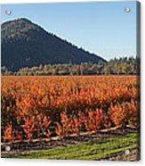 Autumn Blueberry Panorama Acrylic Print