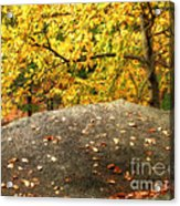 Autumn Boulder And Leaves Acrylic Print