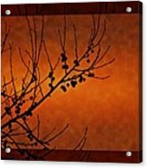 Autumn Branches Acrylic Print