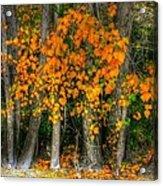Autumn Breakout No.2 Acrylic Print
