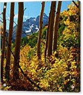 Autumn Brilliance 2 Acrylic Print