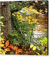 Autumn By A Pennsylvania Mountain Stream Digital Art Acrylic Print