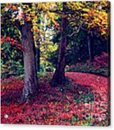 Autumn Carpet In The Enchanted Wood Acrylic Print