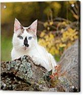Autumn Cat Acrylic Print