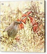 Autumn Catbird Acrylic Print