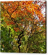 Autumn Color At Old Woman Creek 2 Acrylic Print