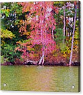 Autumn Color In Norfolk Botanical Garden 1 Acrylic Print