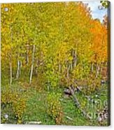Autumn Color Acrylic Print by Baywest Imaging