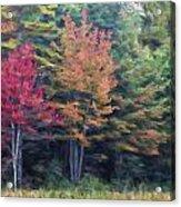 Autumn Color Painterly Effect Acrylic Print