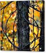 Autumn Colors 1 Acrylic Print