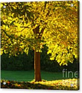 Autumn Colors 10 Acrylic Print