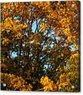 Autumn Colors 11 Acrylic Print