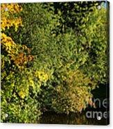 Autumn Colors 3 Acrylic Print