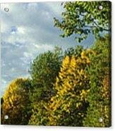 Autumn Colors 6 Acrylic Print