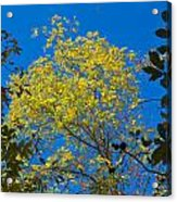 Autumn Colors Against The Sky Acrylic Print