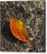 Autumn Colors And Playful Sunlight Patterns - Cherry Leaf Acrylic Print