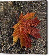 Autumn Colors And Playful Sunlight Patterns - Maple Leaf Acrylic Print