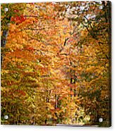 Autumn Colors - Colorful Fall Leaves Wisconsin IIi Acrylic Print