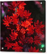 Autumn Colors Early Acrylic Print