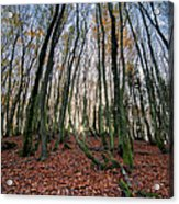 Autumn Colors In The Forrest Acrylic Print