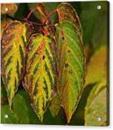 Autumn Colours Acrylic Print by Jacqui Collett