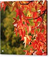 Autumn Cornered Acrylic Print