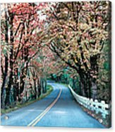 Autumn Country Road Acrylic Print