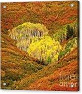 Autumn Crest Acrylic Print