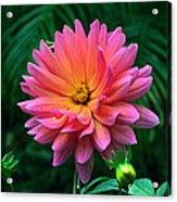 Autumn Dahlias And Palms Acrylic Print