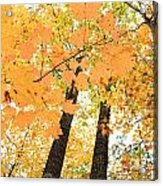 Autumn Days Acrylic Print
