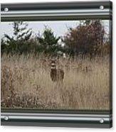 Autumn Deer Acrylic Print