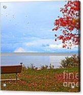 Autumn Acrylic Print by Dipali S