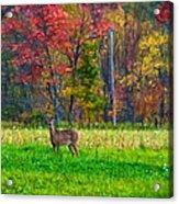 Autumn Doe - Paint Acrylic Print