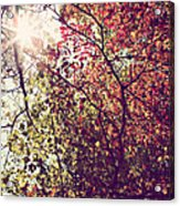 Autumn Dresses In Flame And Gold Acrylic Print