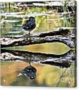Autumn Duck Reflections Acrylic Print