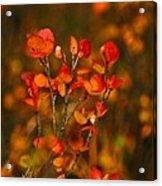 Autumn Emblem Acrylic Print