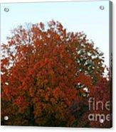 Autumn Eve Acrylic Print