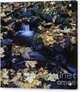 Autumn Fall Colors Starvation Creek State Park Acrylic Print