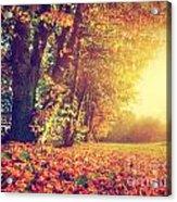 Autumn Fall Landscape In Park Acrylic Print