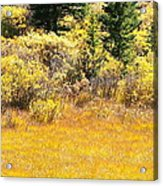 Autumn Fire In The Grass Acrylic Print