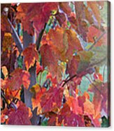 Autumn Flame Acrylic Print by Dana Moyer