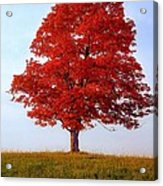 Autumn Flame Acrylic Print