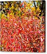 Autumn Flames Acrylic Print