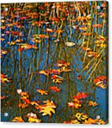 Autumn  Floating Acrylic Print by Peggy Franz