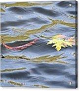 Autumn Floats Away Acrylic Print