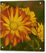 Autumn Flowers Acrylic Print